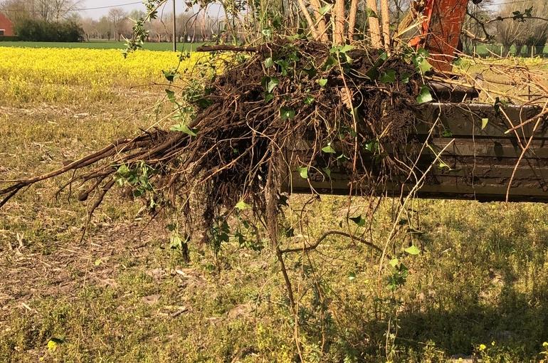 Opkuisen tuin en afvoeren groenafval 5
